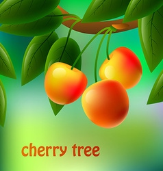 Yellow juicy sweet cherries on a branch for your vector
