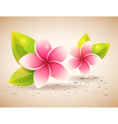 Peaceful and relaxing card with spa flowers vector