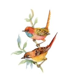Watercolor forest birds on twig vector