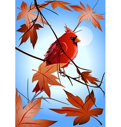 Northern cardinal on the maple branch vector