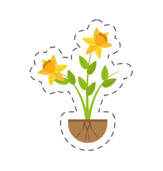Daffodil flower spring floral growing vector