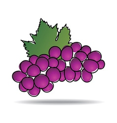 Freehand drawing grape icon vector
