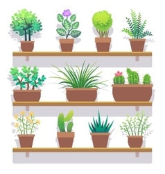 Indoor plants in pots flat icons set vector