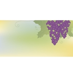 Bunches of grapes with leaves vector