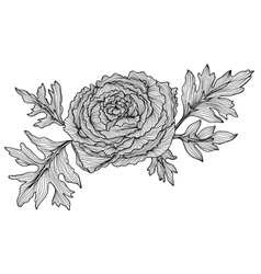 Decorative ranunculus vector