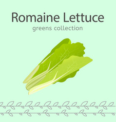 romaine lettuce image vector image vector image