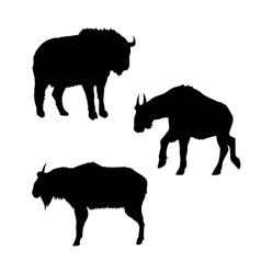 Takin silhouettes vector image