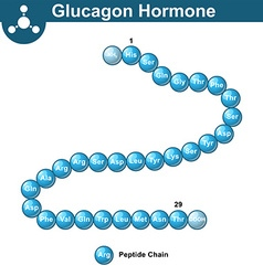 Glucagon hormone chemical structure vector