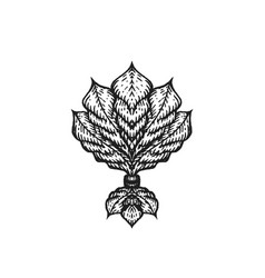 engraving tattoo blackwork ornament vector image