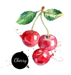 Hand drawn watercolor painting cherry on white vector