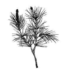 Decorative silhouette hand drawn pine branch vector
