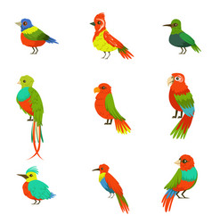 Exotic birds from jungle rain forest set of vector