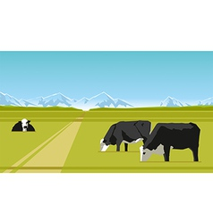 Farm cows vector image
