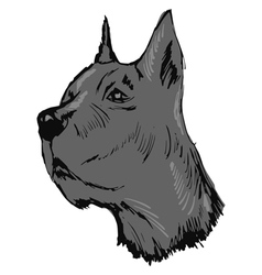 Great dane dog vector