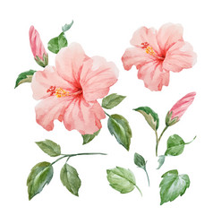 Watercolor tropical hibiscus flower vector