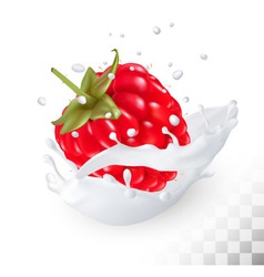 Juicy raspberry in a milk splash on a transparent vector image