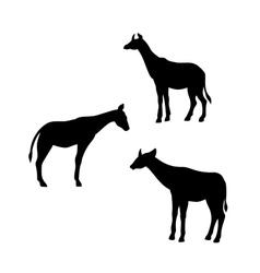 Okapi silhouettes vector