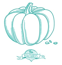 Outline hand drawn sketch of pumpkin flat style vector