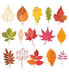 autumn collection vector image
