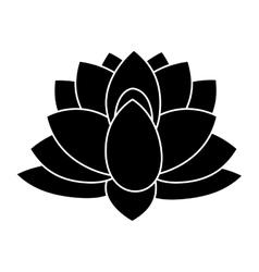 Indian lotus flower vector