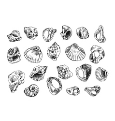 with sea shells vector image vector image