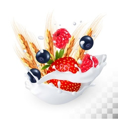 Strawberry and blueberry and raspberry and wheat vector