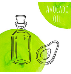 Hand drawn avocado oil bottle with green vector