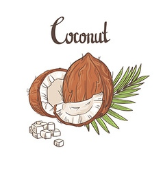Coconut background vector image
