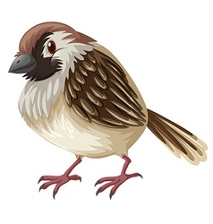 Little sparrow with brown feather vector image vector image