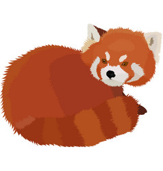 Red panda cartoon style vector