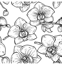 Floral seamless pattern with hand drawn orchid vector