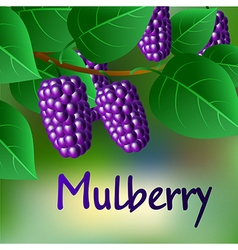 Blue juicy sweet mulberries on a branch for your vector
