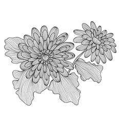 Decorative gerbera vector