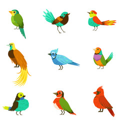 Exotic birds from jungle rain forest collection of vector