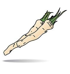 Freehand drawing horseradish icon vector image