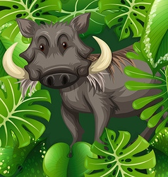 Wild pig in the bush vector