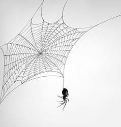 Scary spider hanging from a web vector