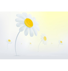 Chamomile flowers in the mist vector