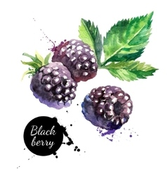 Hand drawn watercolor painting blackberry on vector
