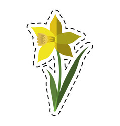 Cartoon daffodil flower leaf bloom vector