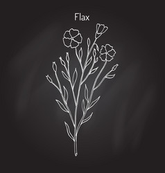 Flax plant with flowers vector