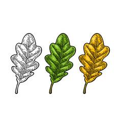 oak leaf spring green and autumn orange vector image vector image