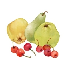 Watercolor painting of apples pear and cherries vector