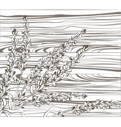 Lavender flowers on wood background vector image