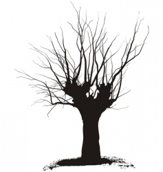 acacia tree vector image