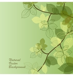 Natural background with green leaves vector