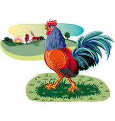 Rooster in a meadow vector