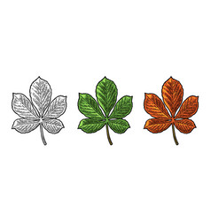chestnut leaf spring green and autumn orange vector image