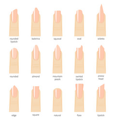 different fashion nail shapes set kinds of nails vector image vector image