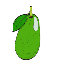 isolated avocado vector image